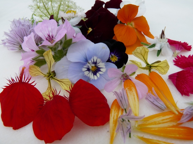 edible flowers 3